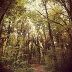Angerlohe Wald