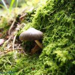 Pilz Moos Wald