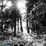 Hartlholz Wald München
