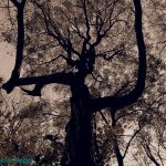 Baum Angerlohe Wald