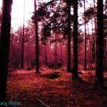 Schweizerholz Wald München