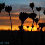 Sonnenuntergang Hochmuttinger Heide