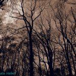 Angerlohe Bäume Wald