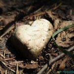 Steinherz; Herz aus Stein